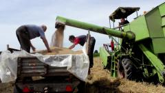 Harvest. Combine loading tractor trailer with grain of wheat. Stock Footage