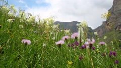 Picturesque green meadow with blooming lilac and white flowers on  of sky Stock Footage