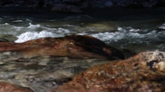 beautiful little rapids in the river-bed - stock footage