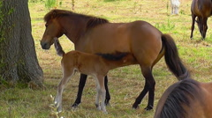 Mare And Horses With Foal - stock footage