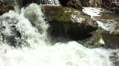 Algea on a river rock Stock Footage