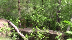 A cougar lurking in the woods Stock Footage