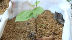 Young plants growing in potting soil Stock Footage