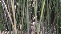 Bamboo in the giant panda breeding research center in chengdu Stock Footage