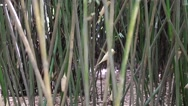 Stock Video Footage of bamboo in the giant panda breeding research center in chengdu
