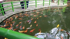 Tourists watching koi fish at the giant panda breeding research center in che Stock Footage