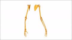 Skeleton kädet Arkistovideo