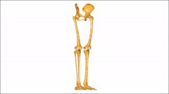 Hip with legs, In vertebrate anatomy, hip (or coxa in medical terminology) Stock Footage
