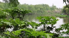 Lake at the giant panda breeding research center in chengdu dolly Stock Footage