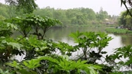 Stock Video Footage of lake at the giant panda breeding research center in chengdu dolly
