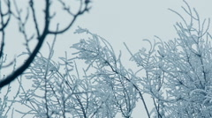 Frozen Branches Stock Footage