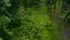Flying Over The Lawn in The Forest Stock Footage