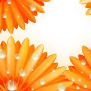 Gerber petals with water drops. plus EPS10 - stock illustration