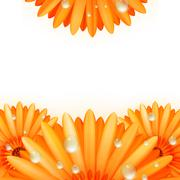 Stock Illustration of Gerber petals with water drops. plus EPS10