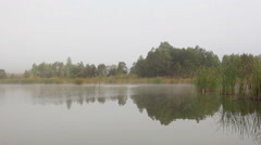Lake landscape in mist - trees and reeds reflected in water Stock Footage