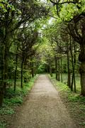 tree alley with footpath - stock photo