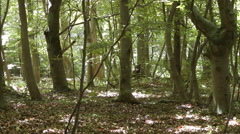 Wood at Nienhagen,  Mecklenburg Western Pomerania, Germany Stock Footage