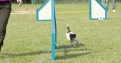 A dog on a dog show with his trainor 4k fs700 odyssey 7q Stock Footage