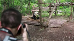 Photographer at the giant panda breeding research center in chengdu Stock Footage