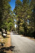 road through forest, uttarkashi district, uttarakhand, india - stock photo
