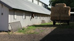 Horse and stable II Stock Footage