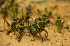 Grasshopper protects the group Stock Photos