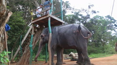 People about to ride an elephant in Sigiriya, Sri Lanka. Stock Footage