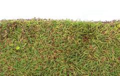 Stock Photo of fresh spring green grass