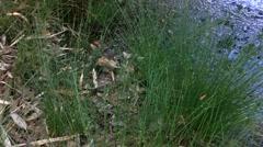 Pan Shot of Murky Swamp Stock Footage