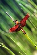 Stock Photo of close up dragonfly