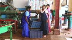 Four local women working on a machine in the tea factory in Nuwara Eliya. Stock Footage