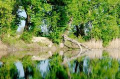 Tree fallen into the lake Stock Photos