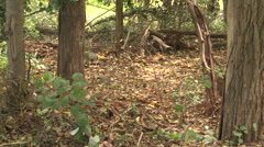 Trees and ground cover summer day thunder rain closeup Stock Footage