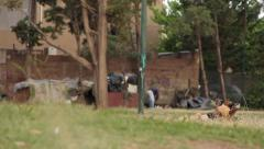 Homeless caring and cleaning the area, with the company of his dogs - Argentina Stock Footage
