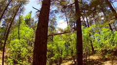 Stock Video Footage of Trees In The Coconino National Forest- Flagstaff Arizona