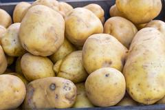 new crop white potatoes at market - stock photo