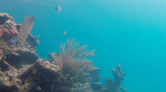 Fish Swimming In Coral Stock Footage