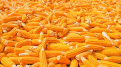 Pile of corn Stock Photos