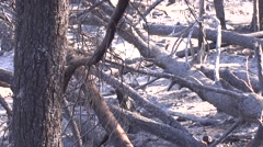 Burnt wood after fire Stock Footage