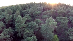 Forest Drone shot Stock Footage