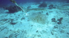 Plastic bottle floating along coral reef - underwater ocean trash Stock Footage