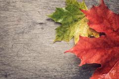 autumn maple leaves on wood table - stock photo