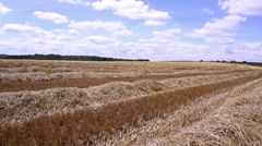 Rows of straw after harvesting wheat. Stock Footage