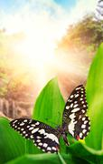 Beautiful butterfly over waterfall in wild forest Piirros