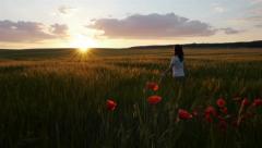 Poppy field on sunset Stock Footage