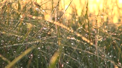 Sunrise waterdrops Stock Footage