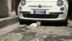 Cat relaxing with Fiat 500 Stock Footage