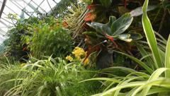 Tropical plant house garden slow pan Stock Footage