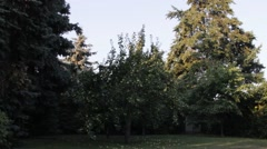 Large group of green apples on the ground under apple tree - stock footage