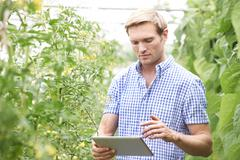 farmer in greenhouse checking tomato plants using digital tablet - stock photo